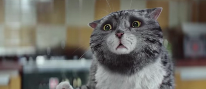Il Natale catastrofico ed eroico della gatta Mog