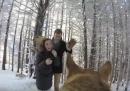 Matrimonio nella neve visto dal punto di vista del cane