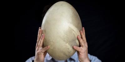 Questo è un uovo