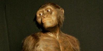 Lucy, l'australopiteco più famoso del mondo