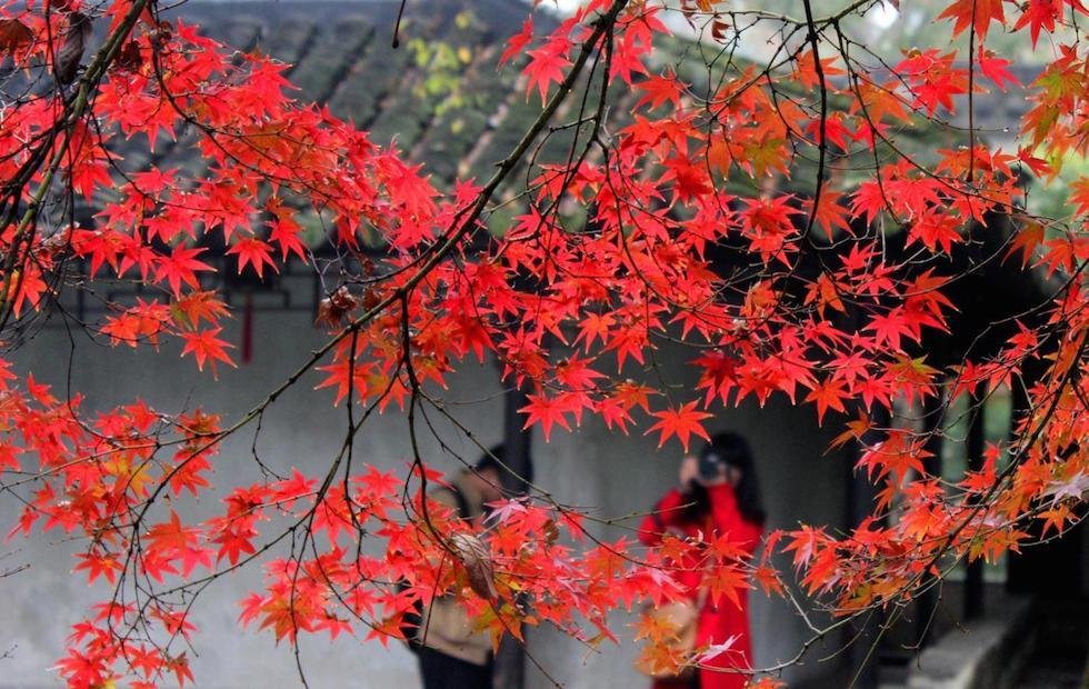 Mercoled 18 novembre il post for Acero rosso milano