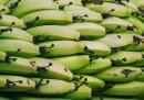C'è una soluzione alla moria delle banane?