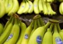Resteremo senza banane?