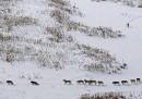 La bufala della foto dei lupi nella neve