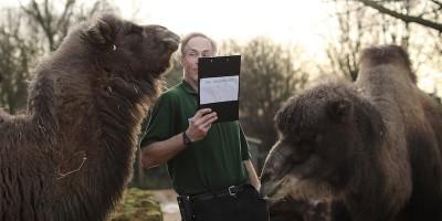 Le foto del censimento annuale allo zoo di Londra