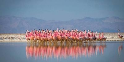 "9 belle GIF di animali da ""Planet Earth II"""