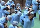 Come si fa a mettere in posa 23 cuccioli di panda