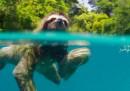 I documentari sulla natura fanno male alla natura?