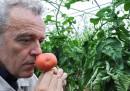 Gli scienziati vogliono darci pomodori più buoni