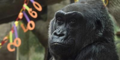 Abbiamo un pregiudizio sugli zoo?