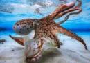 Grandi fotografie scattate sott'acqua