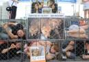 È iniziato lo smantellamento del mercato dei cani di Seongnam, in Corea del Sud, in vista delle Olimpiadi invernali del 2018