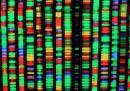 I refusi casuali nel DNA sono i primi responsabili dei tumori