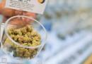 La legalizzazione della marijuana non sembra influire sul consumo dei giovani