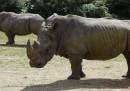 Dei cacciatori di frodo sono entrati in uno zoo a ovest di Parigi, hanno ucciso un rinoceronte di quattro anni e hanno segato il suo corno