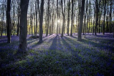 Micheldever Wood, Inghilterra, Regno Unito