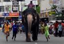 animali-aprile-elefante-sri-lanka