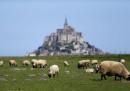 animali-aprile-mont-saint-michel