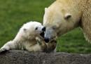 animali-aprile-orsi-bianchi