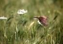 animali-aprile-passero