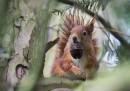 animali-aprile-scoiattolo