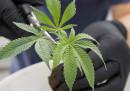 Sappiamo qualcosa in più della legalizzazione della marijuana in Canada
