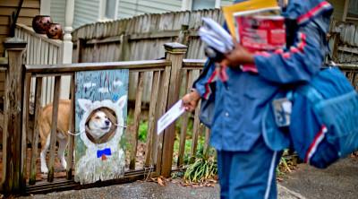 I cani che attaccano i postini, sul serio