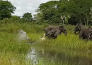 Coccodrillo vs elefante (vince elefante)