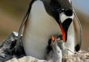 Una triste storia di pinguini raccontata dalla cacca