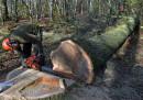 In Polonia è entrata in vigore una legge disastrosa per gli alberi