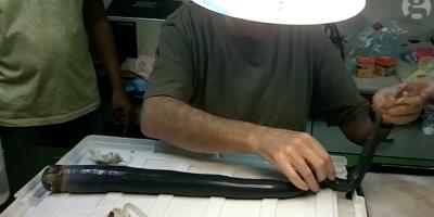 Nelle Filippine hanno scoperto un mollusco-verme gigante