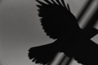 ravens fukase