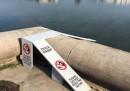 Queste rampe salvano la vita agli anatroccoli del Campidoglio a Washington