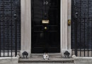 animali-gatto-downing-street
