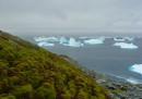L'Antartide sta diventando verde