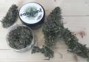 """Cos'è questa storia della """"cannabis light"""" legale?"""