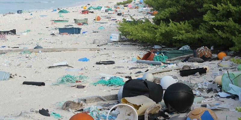 Un 39 isola disabitata in mezzo al pacifico la pi - Foto di animali dell oceano ...