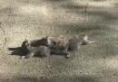 Anche gli scoiattoli possono avere dei problemi intricati