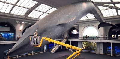 """Cosa è diventato """"Blue Whale"""" in Italia"""