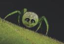 I ragni fotografati da vicino non sono così male