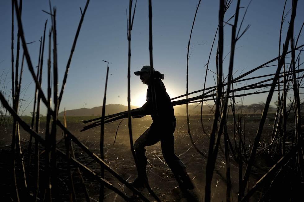 Emigdio Coreas works in a sugarcane fiel