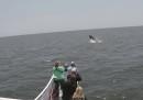A New York sono tornate le balene