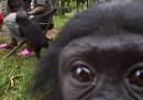 Tra i bonobo comandano le femmine e si fa molto sesso