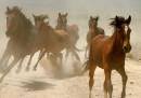 I cavalli del West sono diventati un problema