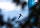 Le foto più belle dei Mondiali di nuoto