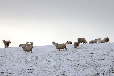 Polar Blast Blankets New Zealand's South Island With Snow