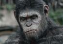 Date un Oscar a questa scimmia