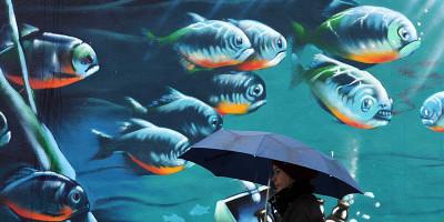 Piovono pesci