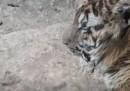 zoo_aleppo