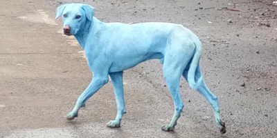 I cani blu di Mumbai